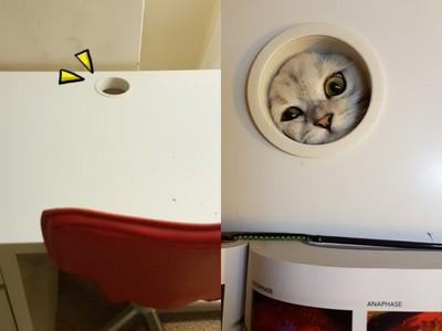 網友求問書桌洞用途…因為我家每天上演「貓咪怪談」