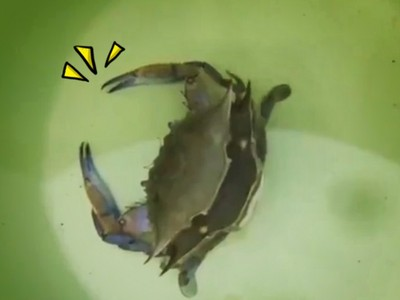 驚!看過「螃蟹中風」嗎?人家在脫殼啦..