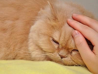 愛拍照又不關閃光…遊客害貓咪雙眼全瞎!