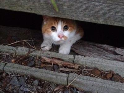 胖貓開心逃家記ฅΦωΦฅ欸..下雨了!快來開門啊~喵