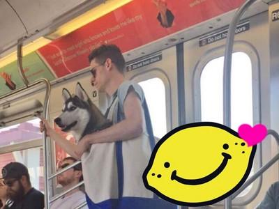 紐約地鐵的萌風景!主人帥氣肩背「哈士奇」出遊中❤