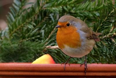 童話故事幻滅! 鳥兒「唱歌」但牠們其實不懂音樂