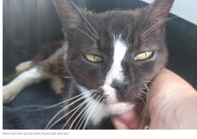 英國貓走失8年 主人飛巴黎重逢