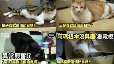 跟貓咪同看○○節目,有一隻異常興奮是要被淨化了嗎?