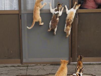 暴力喵星人討吃集團,撲窗圍攻只為:搶糧搶飯搶罐罐!
