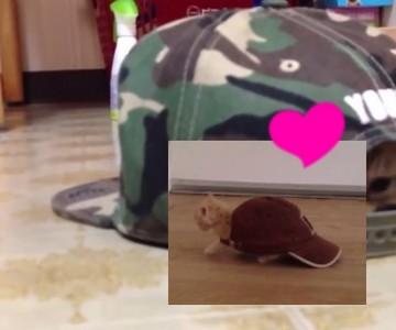 給牠一頂帽子,喵喵秒變「小烏龜」萌進你心坎❤