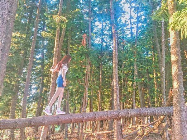 精選中台灣4座美景森林 隨手一拍都是意境照打卡超夯