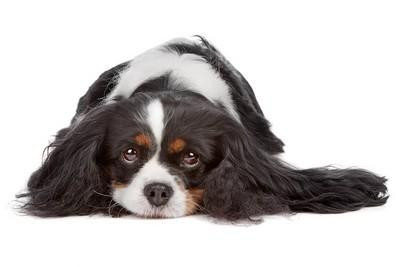 如果看到被遺棄的小狗... 測驗「容易被壞人纏上」程度