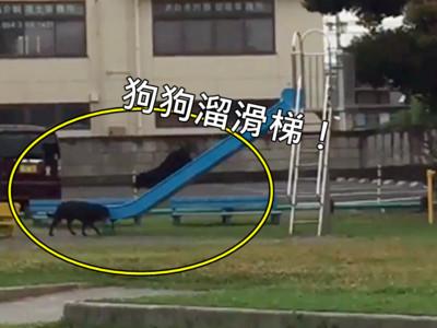 才不只人類愛溜滑梯!公園2隻浪浪自己玩得好~開心~