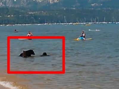 整片海灘都我家!霸氣母熊帶孩子玩水,完全無視人類