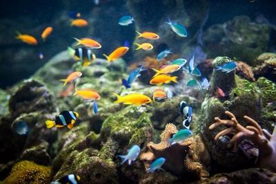 魚兒也會「發燒」? 研究:魚類擁有一定意識感知能力