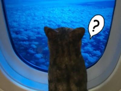 網友偷帶貓咪出境成功!海關放行的原因其實只有一個