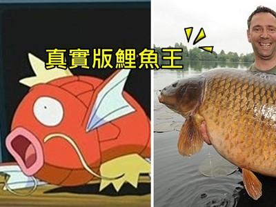 真實版傳奇鯉魚王 11年被釣起63次,最後突離奇死亡