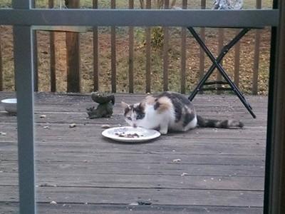 野貓天天來家用膳,滿懷期待收編竟買一送五~太划算啦