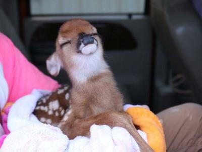 受困洪水中被救起…小鹿露出一抹「安全了」微笑好揪心
