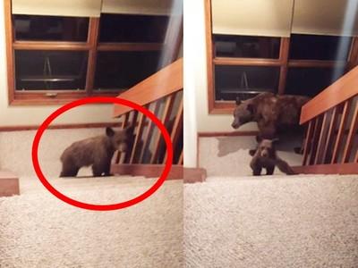 嚇!樓梯有黑影..男子返家發現「熊氏家族」登門造訪!