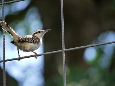 拆解巴別塔之鳥,教你分辨鳥類會不會「說話」