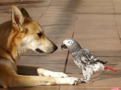 鸚鵡身上有哪些動物的影子?像貓像狗也像人