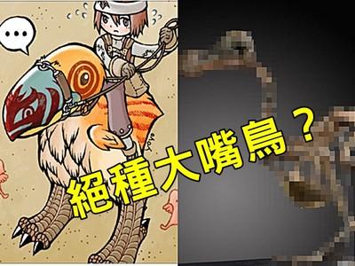 傳說絕種珍獸「RO大嘴渡渡鳥」,完整骨骸首現人間!
