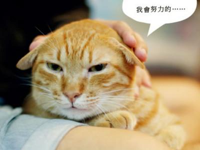 小貓愛挑釁攻擊好困擾?責罵前先問飼主教牠們「社會化」
