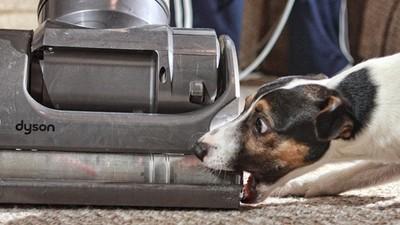 想用吸塵器吸狗毛…先幫汪汪克服對吸塵器的恐懼!