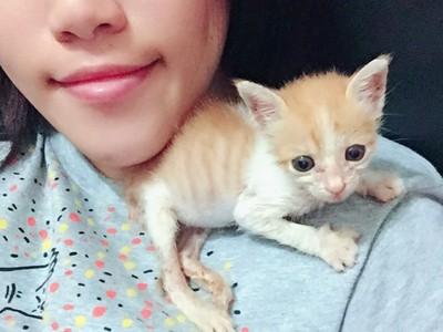 網友看到流浪小貓哭了:「是爺爺託夢裡那隻」