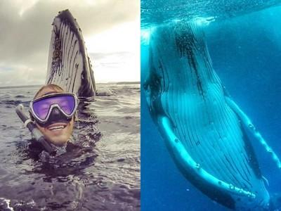 澳洲男海中潛水,意外結識15m「座頭鯨」一同戲水6小時