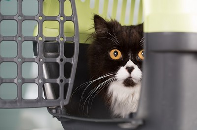 領養黑貓凌晨抓狂!「一家8口」順利逃死劫
