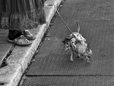 害怕網狀與金屬,狗狗的水溝蓋恐懼其來有自