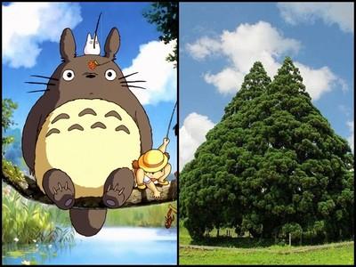 竟然有「龍貓樹」?可以在這找到軟綿綿大龍貓嗎・ω・