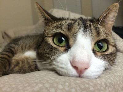 貓奴必學貓咪撫摸訣竅,亂摸一通小心被賞爪!