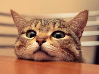 家貓亂咬女友不想關籠!男友:她太愛貓還是我太機車?