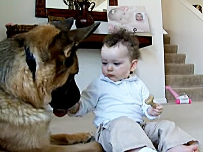 寶寶伸手搶走狗餅乾,狼犬用柔情眼神無聲抗議!