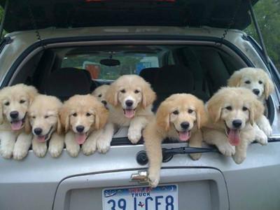 後車廂擠滿了超萌汪星人~後面車子無法專心看路了啦