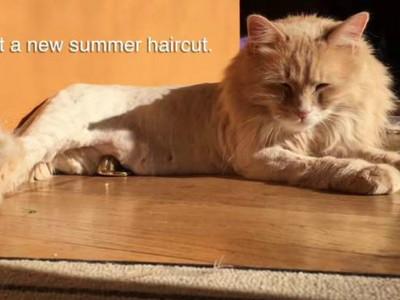 貓咪剃毛後被同伴徹底鄙視..沒有最鬱悶只有更鬱悶