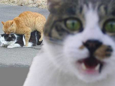 養什麼寵物的人比較容易外遇?只是愛貓也中槍QQ