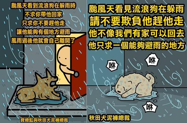 颱風天讓浪浪躲個雨吧 「風雨過後牠們就會自己離開了」(圖/粉絲專頁寶總監與秋田犬泥褲總裁提供)