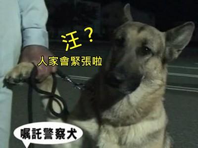 英勇警犬找回失蹤兒童,頒證表揚牠「反差萌」羞抓主人手手