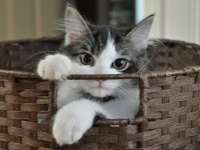 讓貓咪接受醫院的方法,習慣住在外出籠裡更容易帶出門