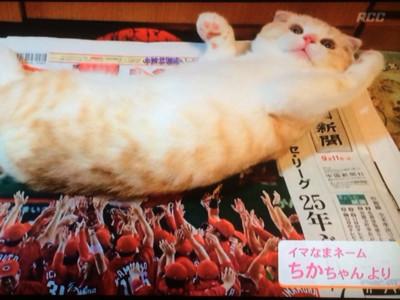 貓貓飛高高!拍照「神瞬間」造就民族英雄(咦
