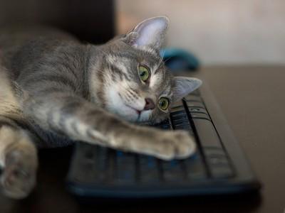 【搞笑諾貝爾】防貓踩鍵盤程式,貓奴們都需要裝一個!