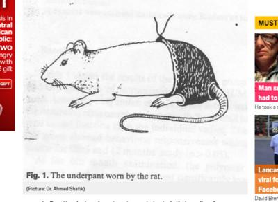 內褲影響性慾 「老鼠性生活」奪獎