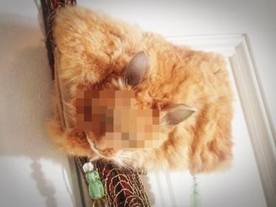流浪貓被車撞死後…他製做「貓皮皮包」結果引來抨擊!