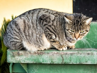 棄養導致生態災難!研究:流浪貓不斷消滅其他物種