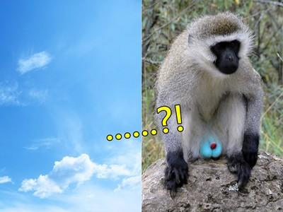 颱風天好討厭,來看你會不會分辨「藍天vs.猴子蛋蛋」