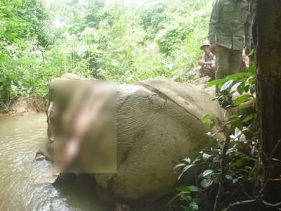 為了賣給中國藥商!亞洲象遭殘忍剝皮、棄屍河邊…