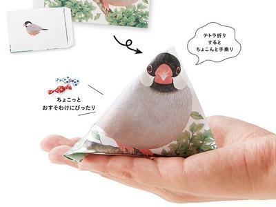 啾啾啾~文鳥在我手上大便啦!欸~掉出來的居然是糖果