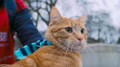 戒毒街頭歌手撿到貓,牠的出現讓他再次像人一樣活著