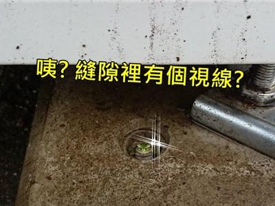 天熱口渴投個販賣機!..洞裡怎麼有股視線盯著我?