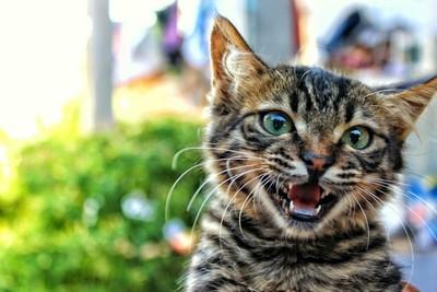 貓咪半夜喵不停? 貓叫「3階段」背後含意...想跟你玩啦